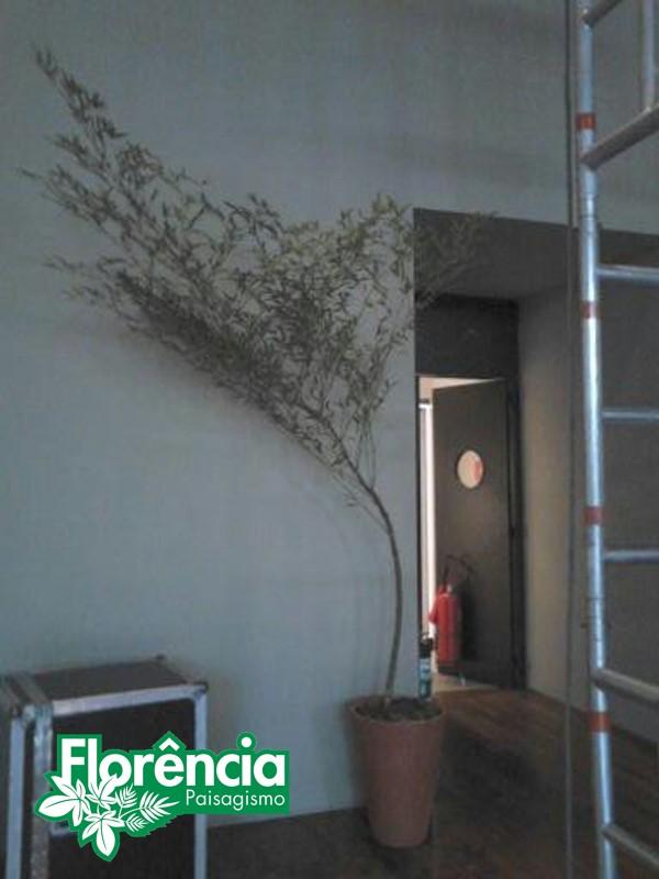 locacao-bambu-mosso