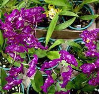orquideas-2-tb
