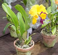 orquideas-3-tb