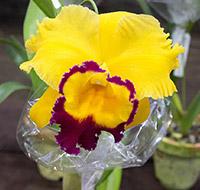 orquideas-4-tb