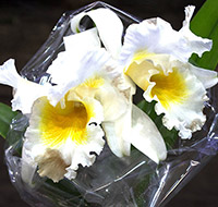 orquideas-tb