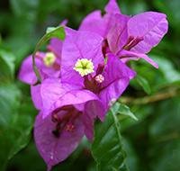 primavera-roxa-2-tb